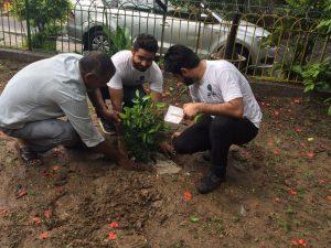 Tree plantation drive - Adopt Plantation as the new fashion